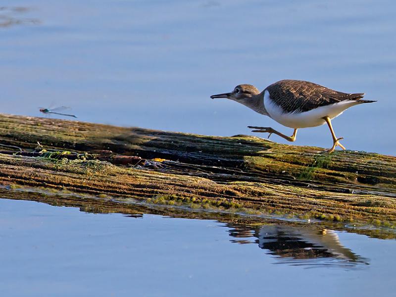 Birds-common-sand-th